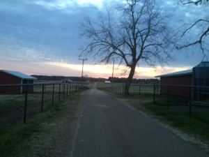 The Farm Road, my normal running place, can be very peaceful early in the morning.